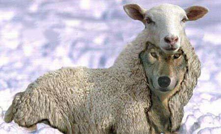 wolf sheeps clothing