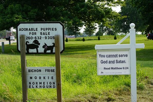 adorable puppies god and satan too