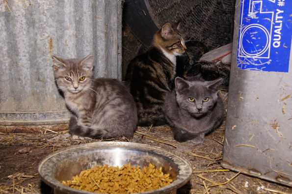 feral cats in barn-008