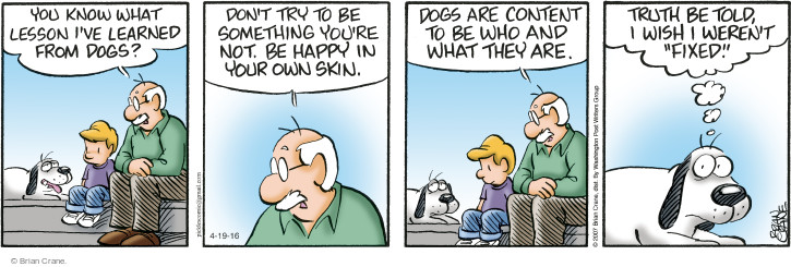 dogs and contentment